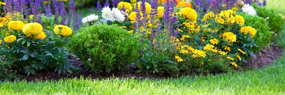 Het gras is altijd groener aan uw kant van het hek!